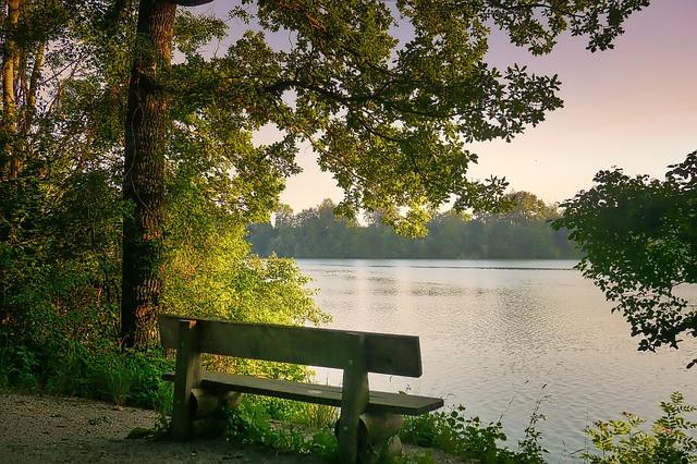 Penkki järven metsäisellä rannalla