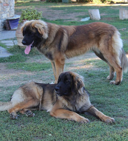 Wiyot Lola e Wiyot Leandro -11 mesi