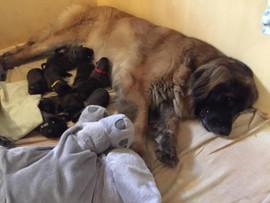 Wiyot Greta e cuccioli