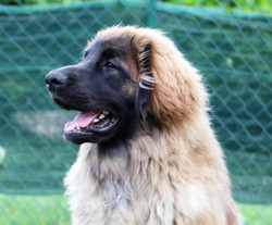 Bruno 11 mesi