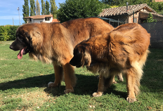 Bruno e Fiore