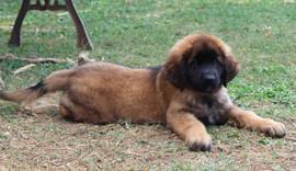 cucciola