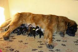 Chantal con i suoi cuccioli
