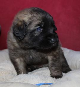 Cucciolo Azzurro