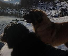 Leonberger AllevamentoWiyot