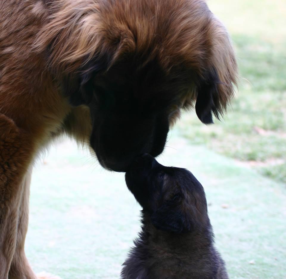 Wiyot Greta e cucciola