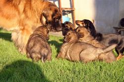 Mamma Fiore con i cuccioli