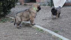 Cucciolo verde e cucciolo giallo