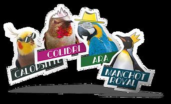 sticker-birdz-mockup.png