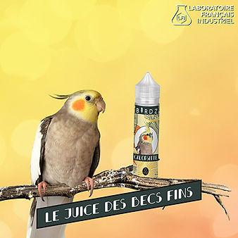 Reseaux_BIRDZ_Calopsitte-03.jpg