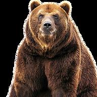 kisspng-grizzly-bear-american-black-bear