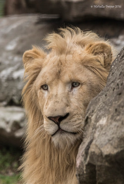 lion rock JPEG WM