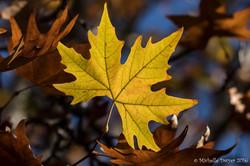 autumn leaves JPEG WM