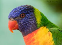 rainbow close up JPEG WM