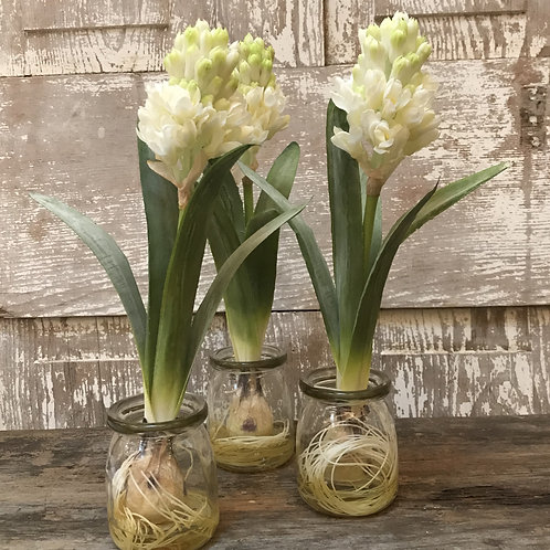 "Hyacinth ""Bulbs"" in Glass"