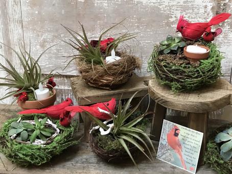 Cardinal Nests