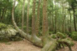 arbre-lyre-labyrinthe.jpg