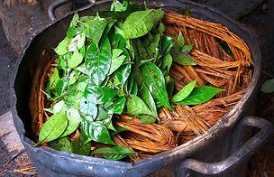 39-ayahuasca-psychotria-768x494.jpg