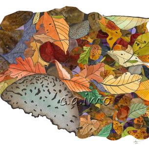 Leaves on Rocks 3