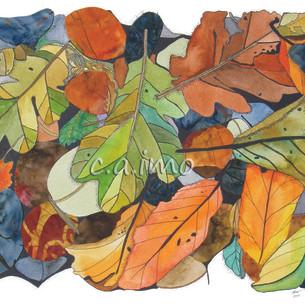 Leaves on Rocks 1.jpg