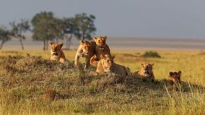 world's magnificent wildlife destination