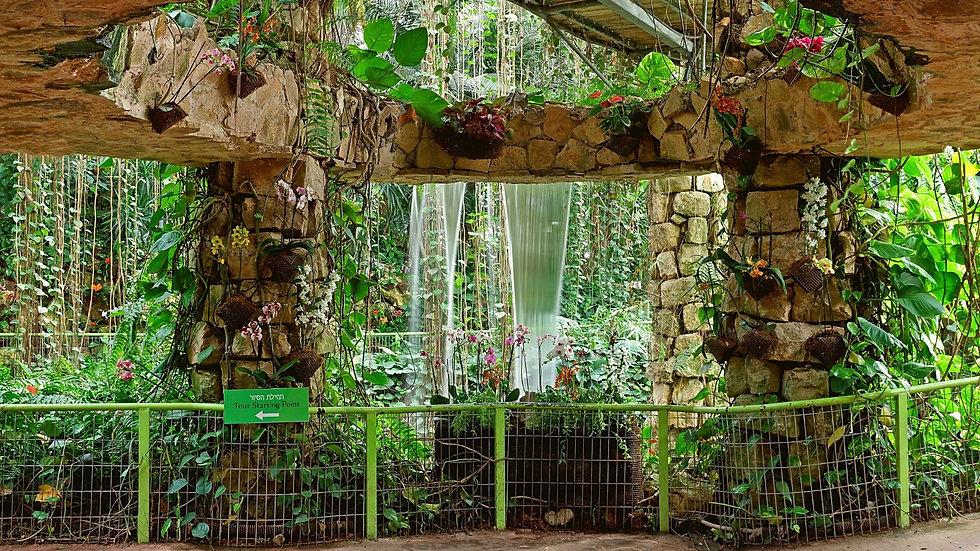 Orchid park .jpg