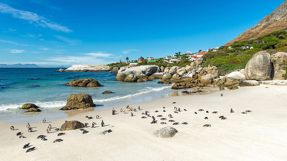Penguin Colony.jpg