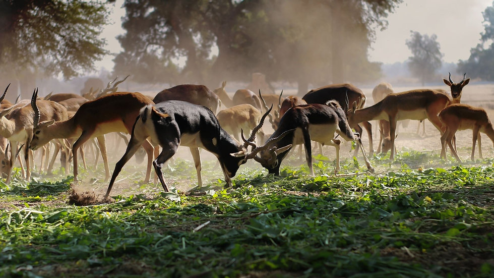 Documentary on Wildlife of Kanha.jpg