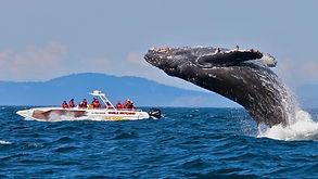 Blue Whale watching.jpg