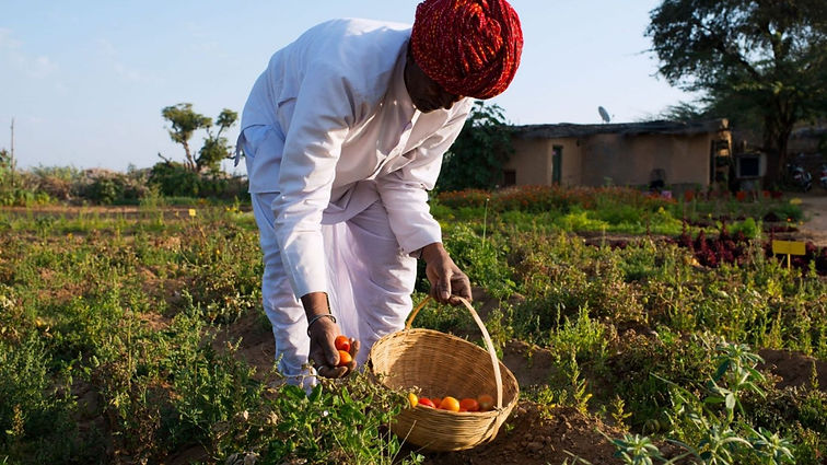 Rajawas Village - learn about organic fa