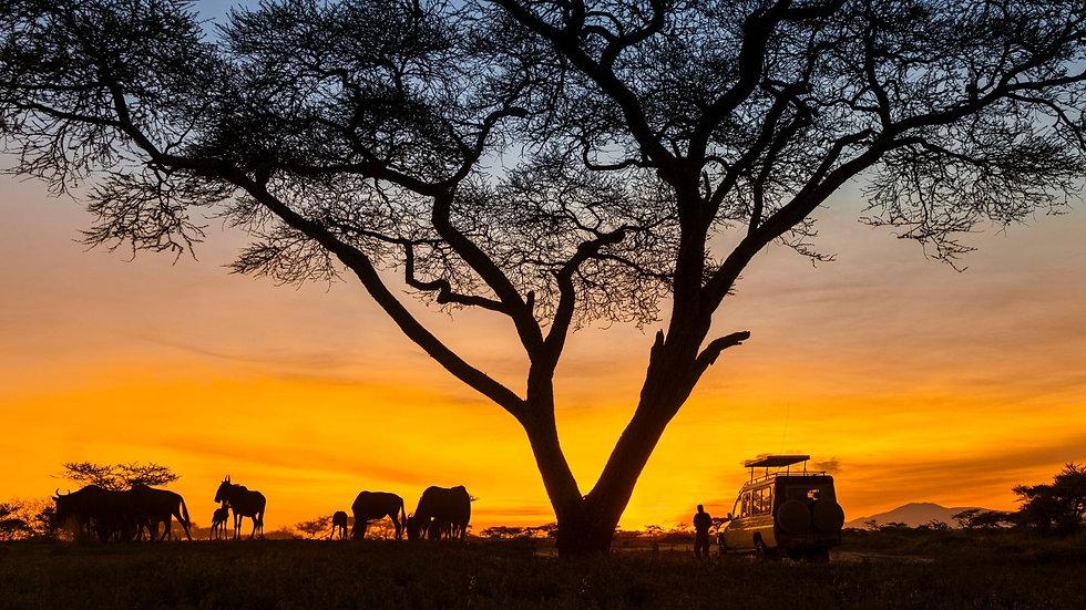 4x4 Vehicle Night Jeep Safari.jpg