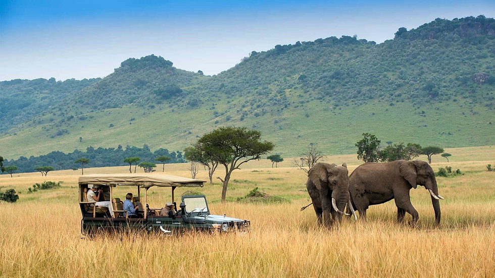 Jungle safari.jpg