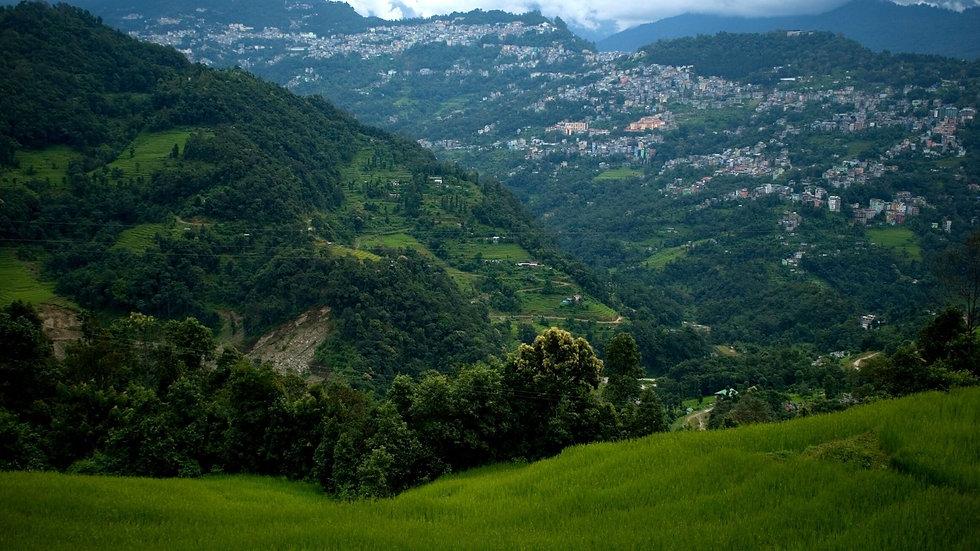 Gangtok + Pelling - Farm Visit .jpg
