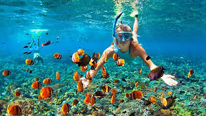 For Snorkeling & Dive - Incredible Under