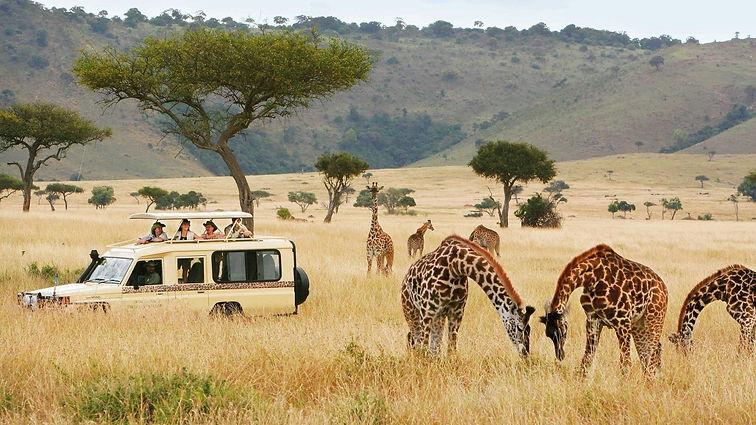 Tarangire 01 Morning Game Drive (Jungle
