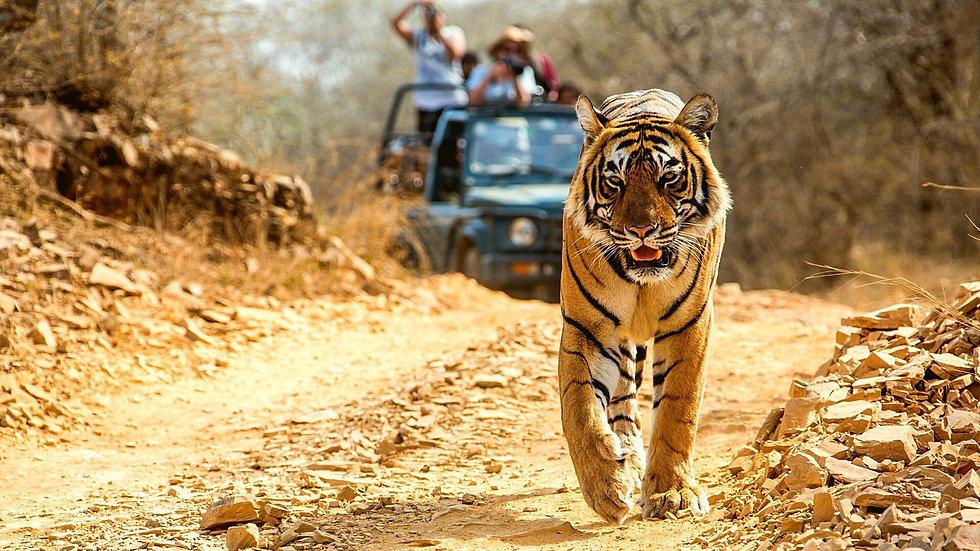 Jeep safari at Panna Tiger reserve .jpg