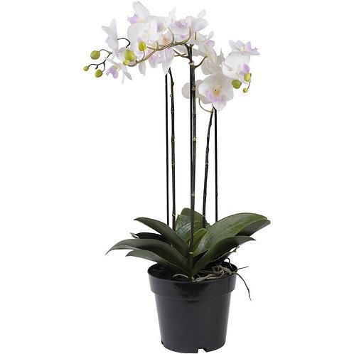 Faux White Orchid In Black Pot 71cm