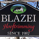 Dairy cattle hoof trimming since 1987.