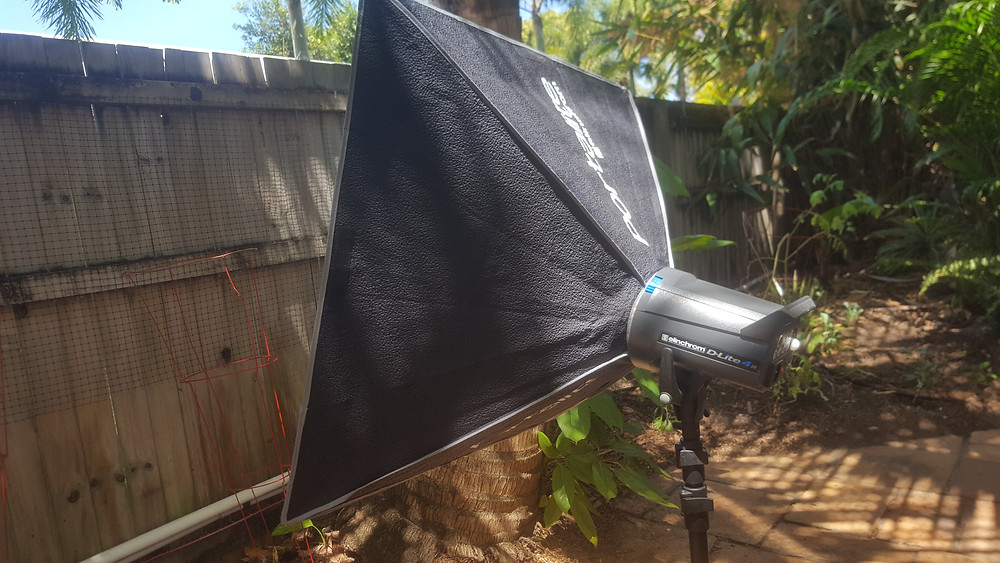Got the studio lights out in the garden