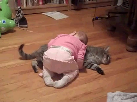 Кошка1.jpg