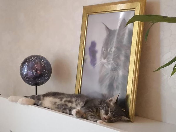 Кошка9.jpg