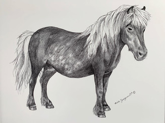 horse1-closeup.jpg