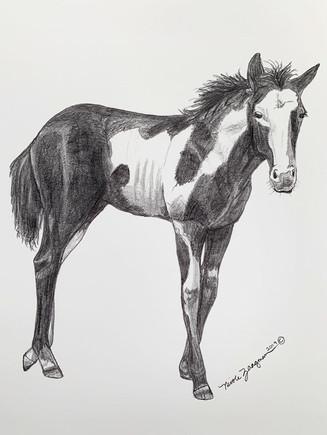 horse3-closeup.jpg