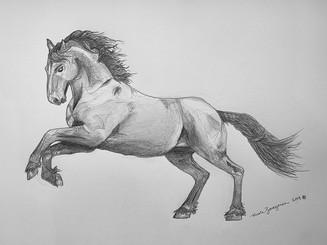 horse4-closeup.jpg