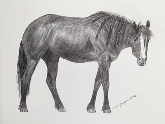horse2-closeup.jpg