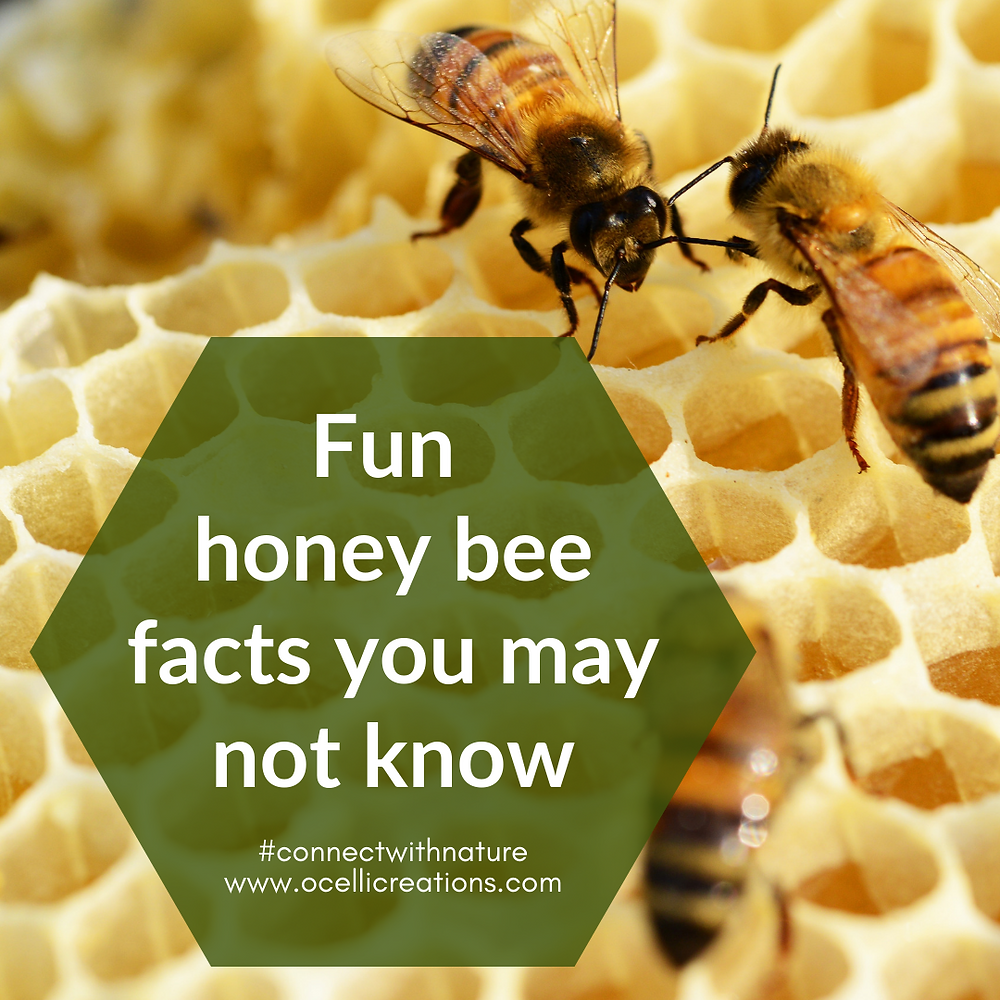 Fun honey bee facts you may not know!