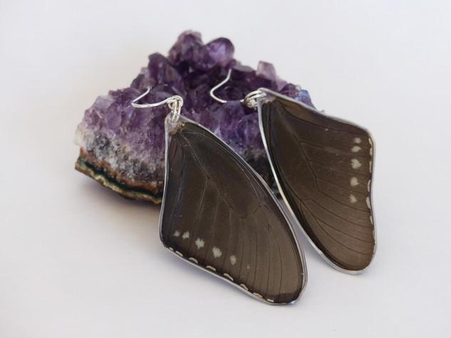 pipevine_swallowtail_forewing_earrings.j