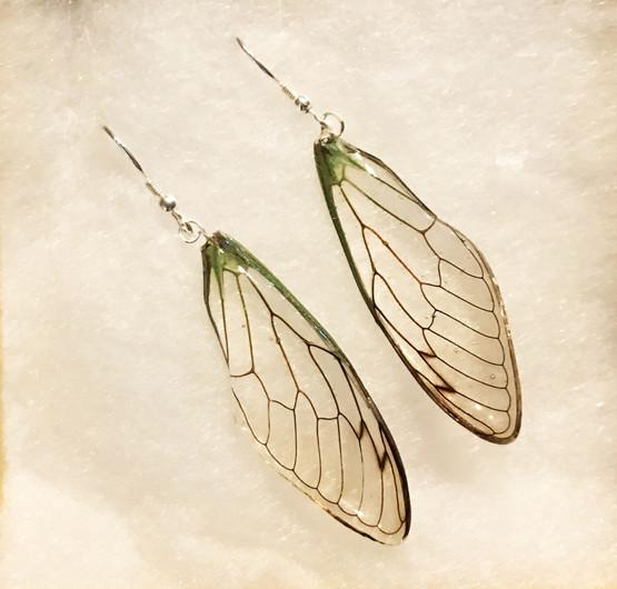 Cicada forewings silver hook.jpg