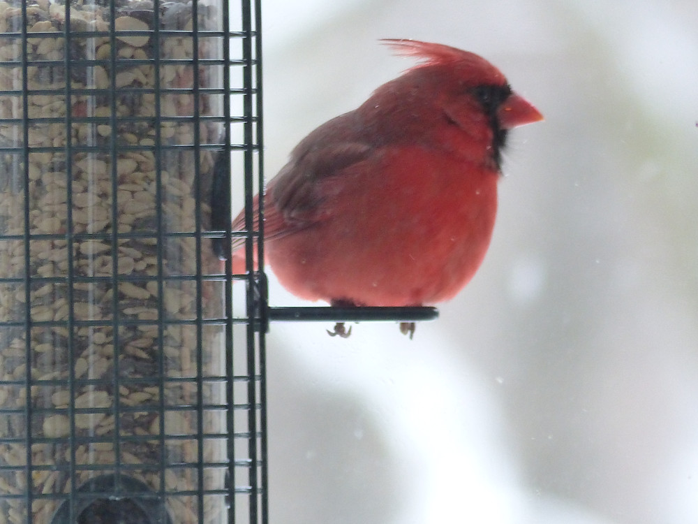 Connect with nature in the winter -- put up a bird feeder!
