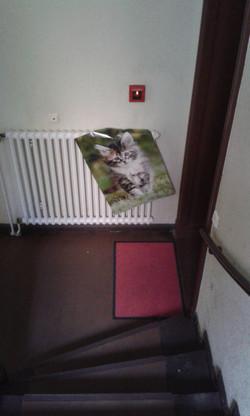 Katzenposter posten_2017